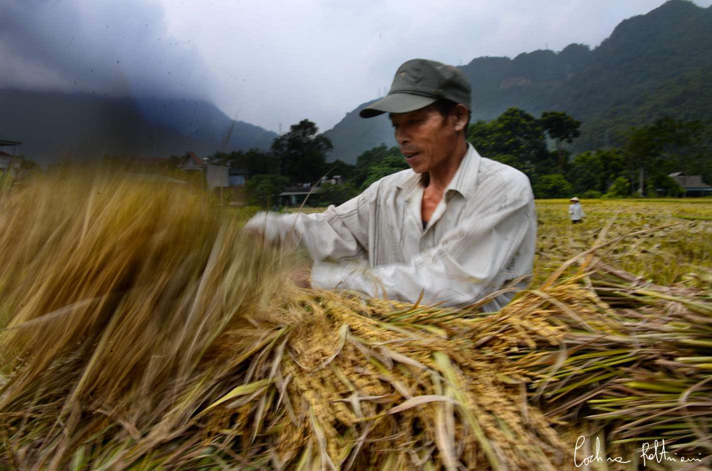 riso vietnam1