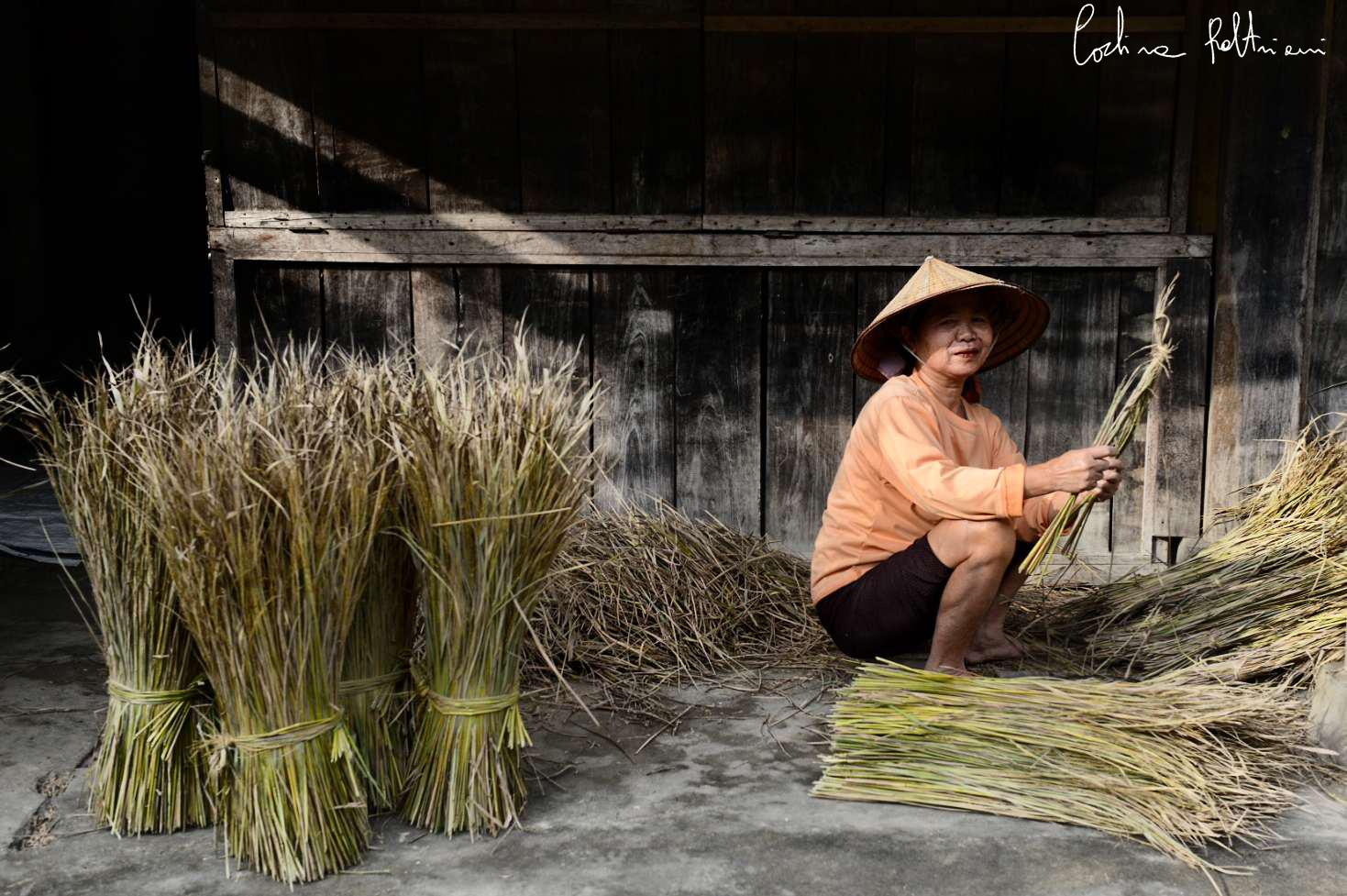 riso vietnam3